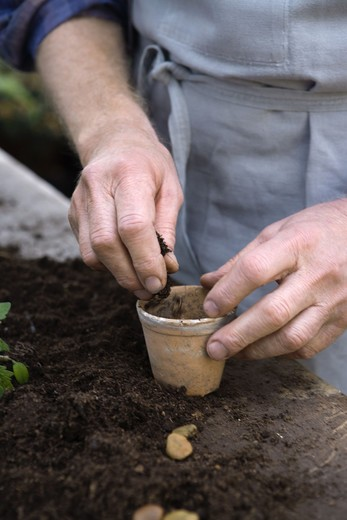 Stock Photo: 4306R-11771 An old scandinavian man pots a plant, Sweden.