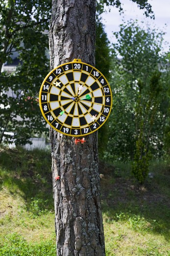Stock Photo: 4306R-15587 Arrows on a tree.