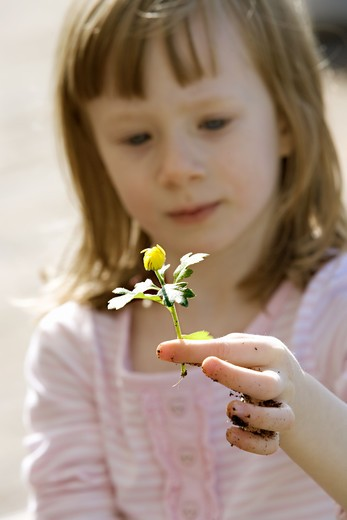 A little girl with a flower, Sweden. : Stock Photo