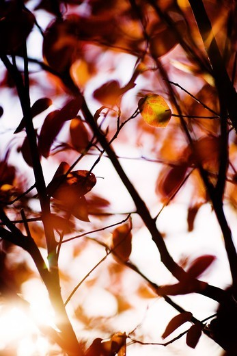 Autumn leaves, Sweden. : Stock Photo