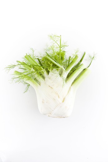 Stock Photo: 4306R-19788 Fennel, close-up.