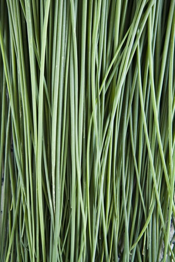 Chives, close-up, Sweden. : Stock Photo