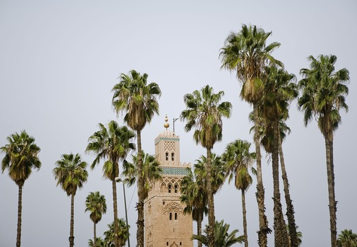 Stock Photo: 4306R-21123 Mosque and palmtrees, Marrakech, Morocco.