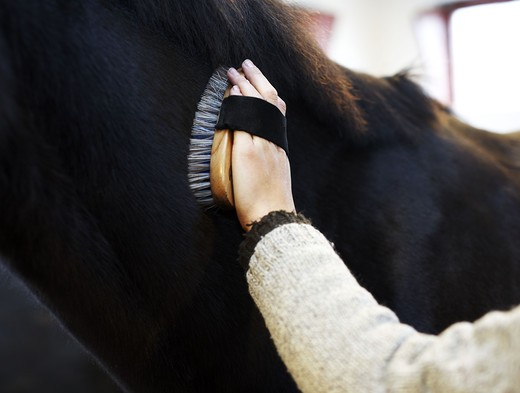 Stock Photo: 4306R-21219 A woman grooming a horse, close-up, Sweden.