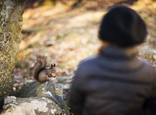 Stock Photo: 4306R-21248 Girl looking at a squirrel, Sweden.