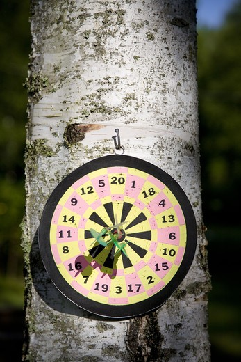 Stock Photo: 4306R-21445 Dart board on tree trunk