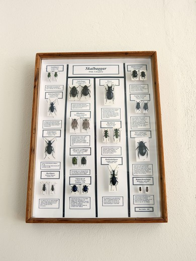 Stock Photo: 4306R-26324 Framed beetle collection on wall