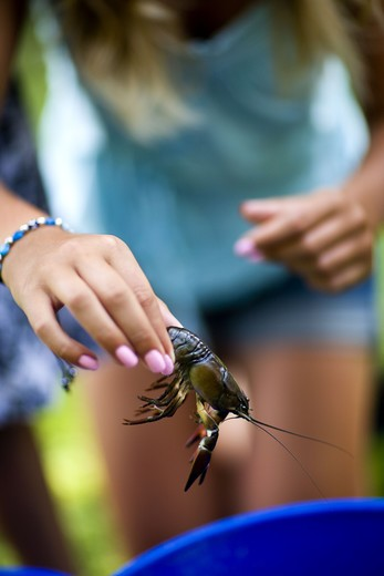 Girl holding crayfish, close-up : Stock Photo