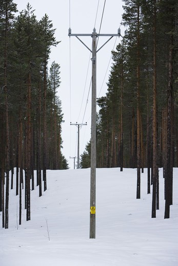 Telephone wire in the forest, Sweden. : Stock Photo