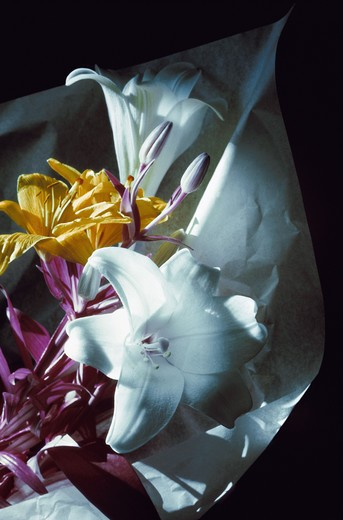 Stock Photo: 4306R-6462 Multicoloured lily flowers wrapped in paper