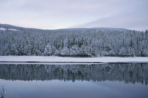 Calm lake with forest in winter : Stock Photo