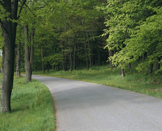 Country road with deciduous forest on both sides : Stock Photo