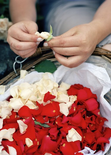 Stock Photo: 4306R-8134 Woman separating petals from flowers