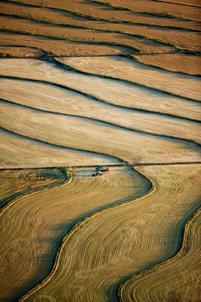 Stock Photo: 4316-1681 Terraced Rice Fields in Sacramento River Delta