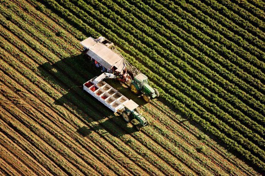 Stock Photo: 4316-1694 Tomato Harvest