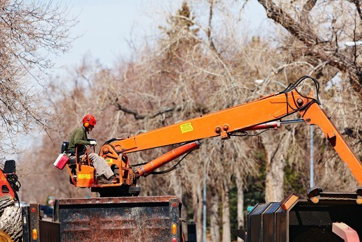Stock Photo: 4316-4376 Boom Operator During a Tree Trimming Operation