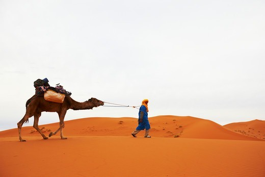 Stock Photo: 4316-5172 Bedouin nomad leading supply-laden camel deep across a dune field deep in the interior of the Sahara Desert, Morocco
