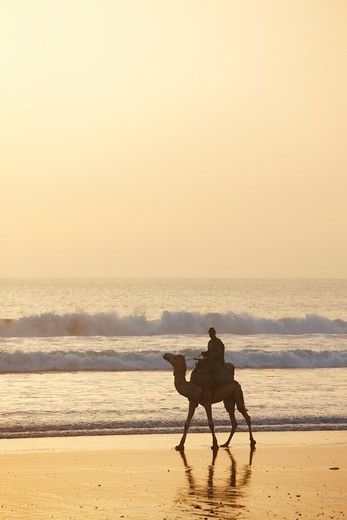Stock Photo: 4316-5187 Silhouette of camel and rider on coast, near Agadir, Atlantic coast of Morocco