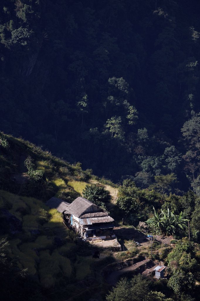 Stock Photo: 4316-6229 Nepal, Elevated view of terraced hillside in small village