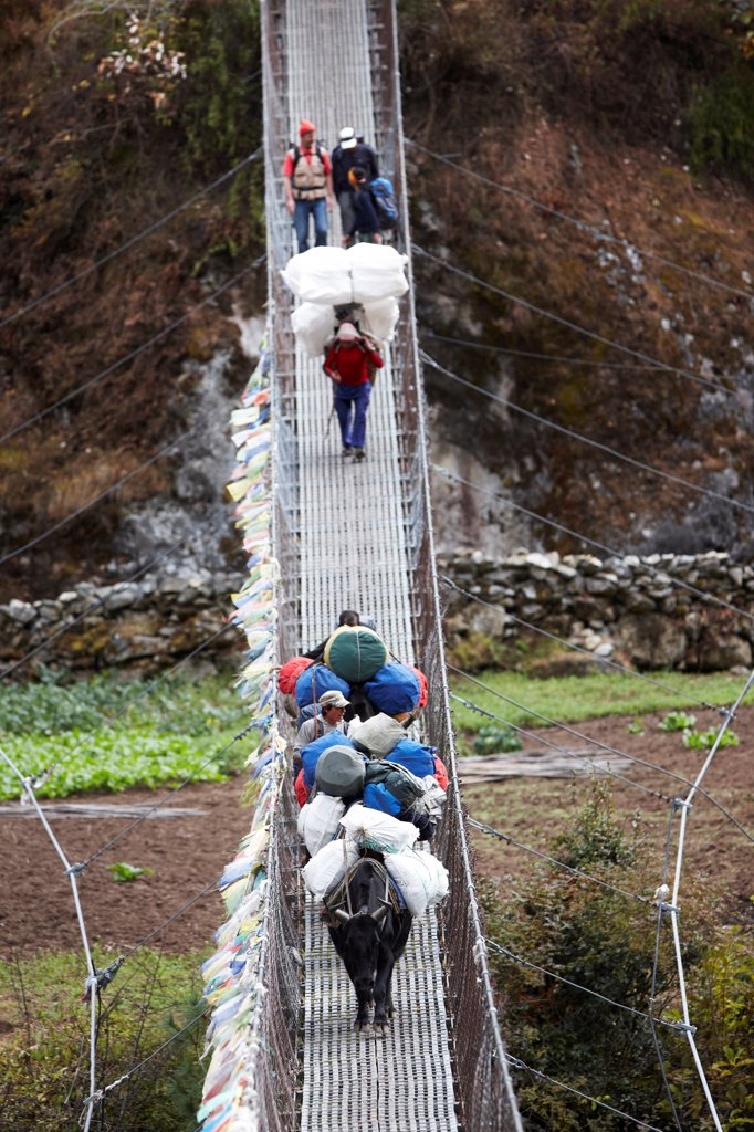 Stock Photo: 4316-6257 Nepal, Himalaya, Solukhumbu District, Khumbu, trekkers, yaks and Sherpa porters on suspension footbridge, elevated view