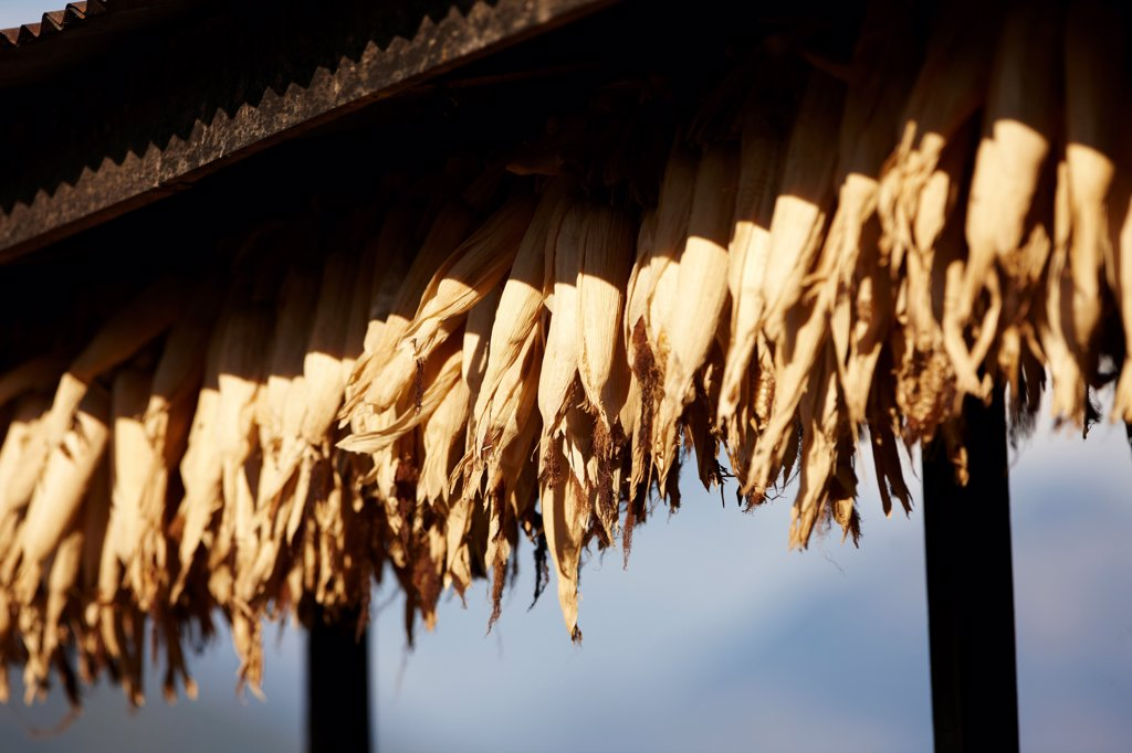 Nepal, Hil=malaya, Num Village, drying cobs of corn hanging from edge of roof : Stock Photo