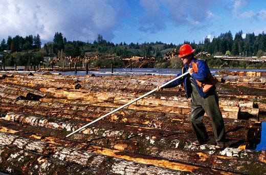 Stock Photo: 433-1021C Lumberjack working in a lumberyard, Oregon, USA