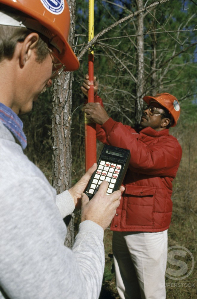 Stock Photo: 433-1039B Tree Inspector