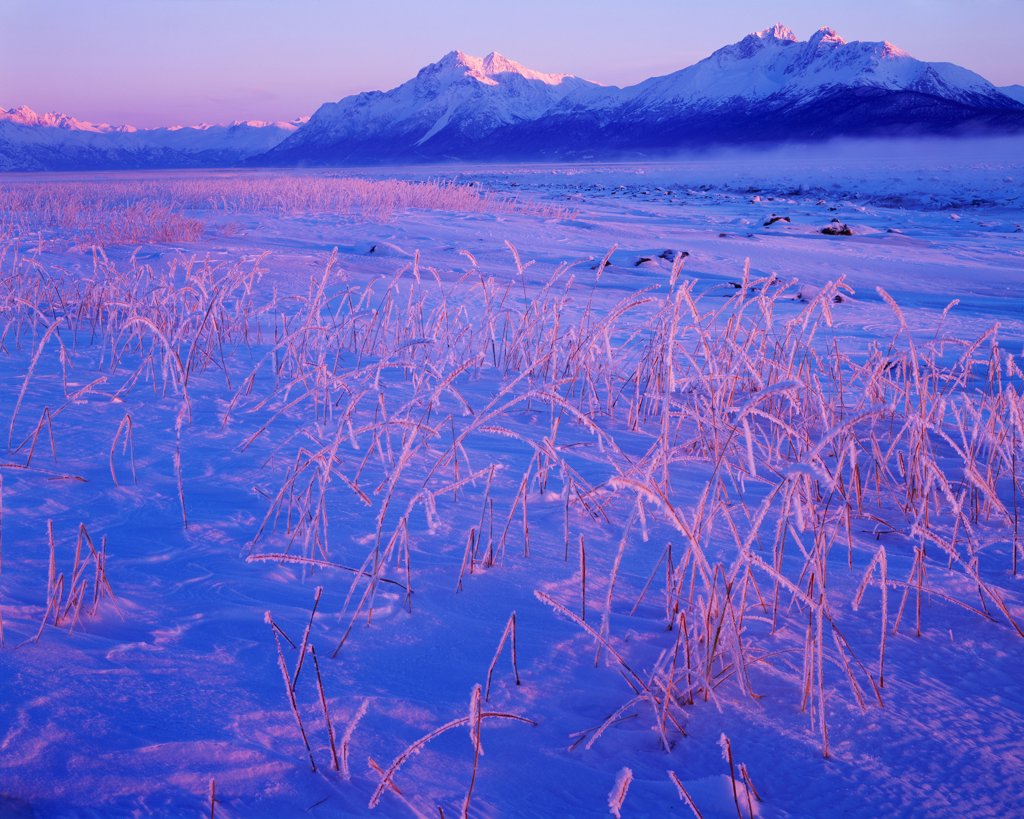 Stock Photo: 4332-1527 Low winter sun illuminating frosted rye grass and Pioneer Peak, Goat Mountain and Twin Peaks of the Chugach Mountains at -20F, Knik Arm, Palmer Hay Flats State Game Refuge, Alaska.