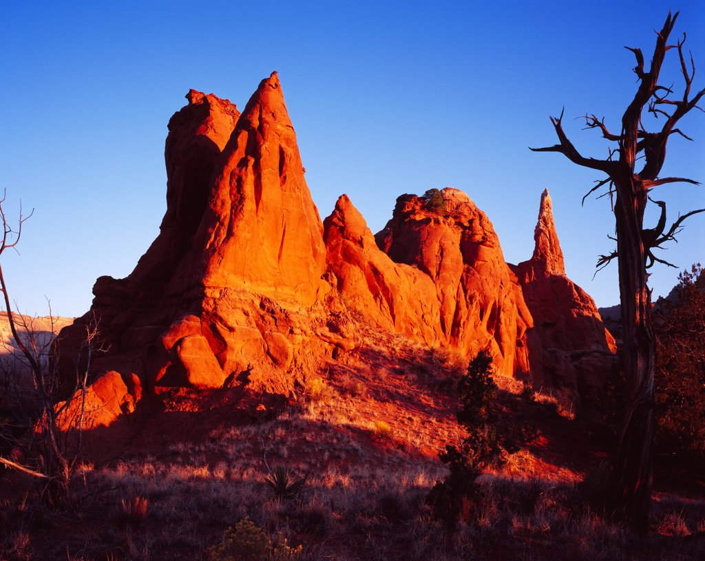 Stock Photo: 4332-3190 Entrada Sandstone spires illuminated by sunrise, Kodachrome Basin State Park, Utah.