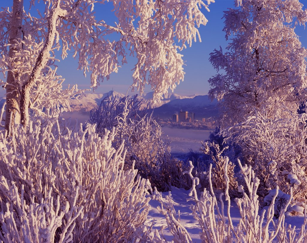 Rime-covered balsam poplars and willows framing skyline of Anchorage and Chugach Mountains on a winter day at Earthquake Park, Anchorage, Alaska. : Stock Photo