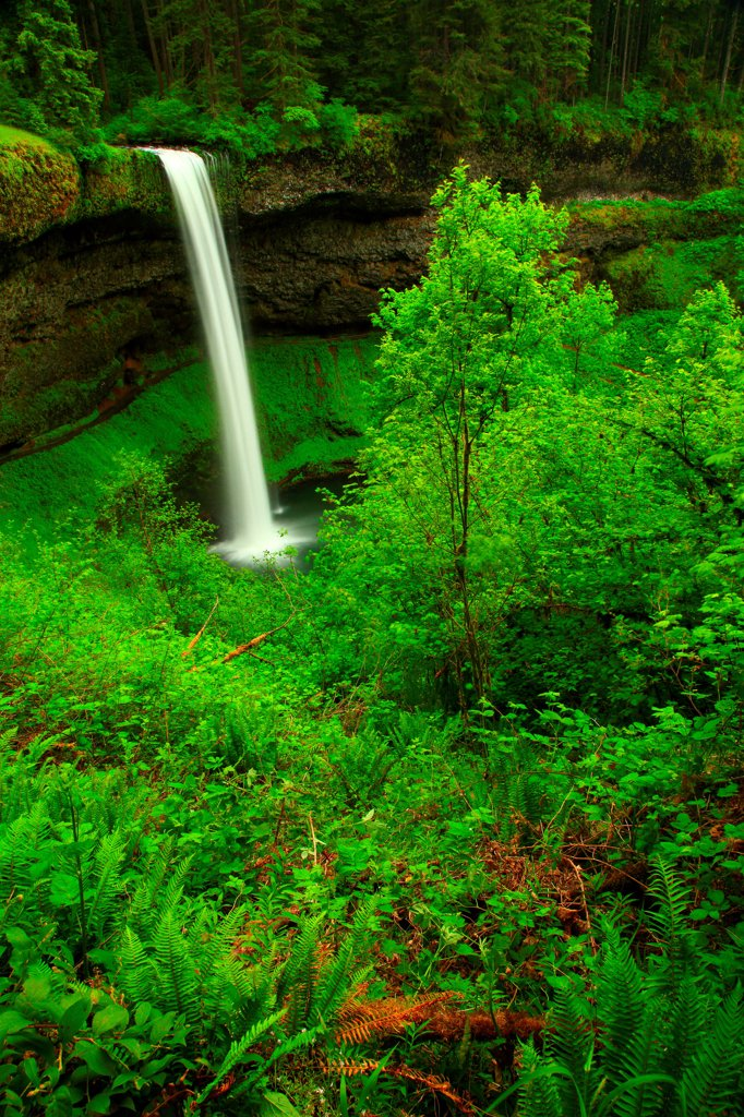 Stock Photo: 4334-1105 USA, Oregon, Silver Falls State Park, South Falls