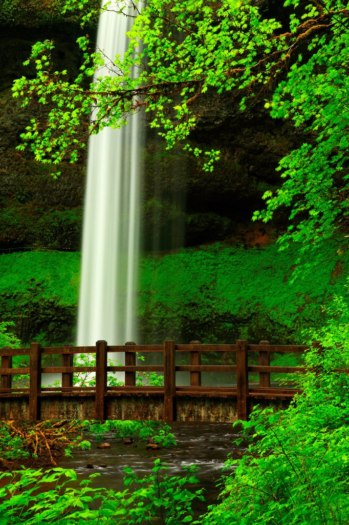 USA, Oregon, Silver Falls State Park, South Falls and hiking bridge : Stock Photo