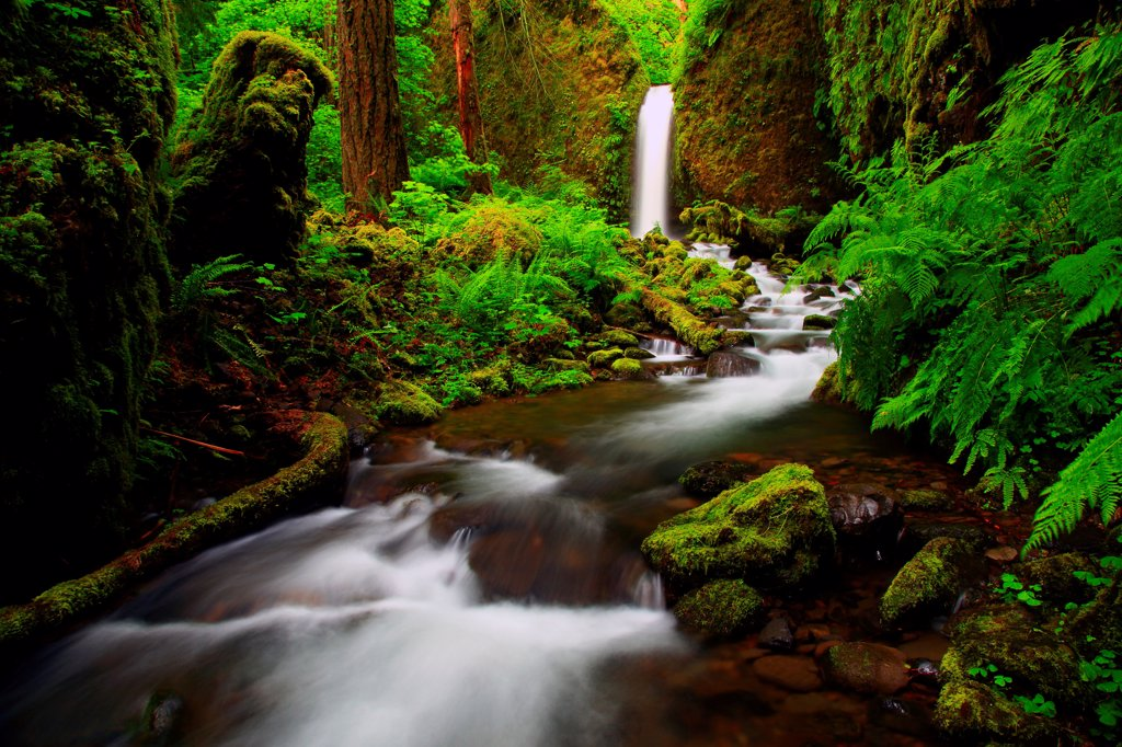 Stock Photo: 4334-1118 USA, Oregon, Columbia River Gorge National Scenic Area, Ruckel Creek