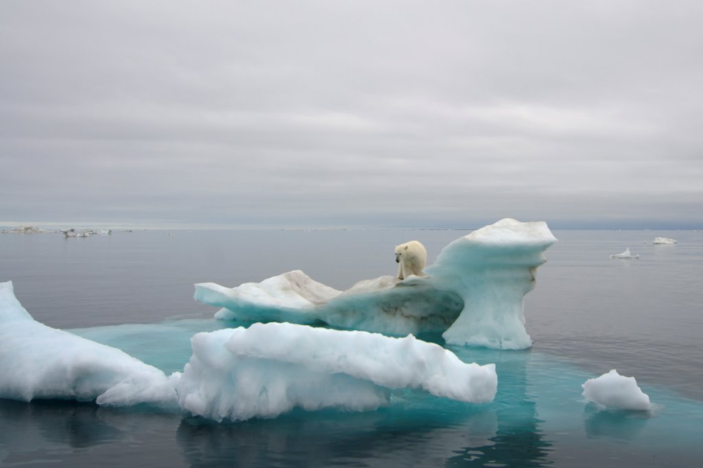 Stock Photo: 4340-1103 Polar Bear on an Iceberg Floating in the Beaufort Sea