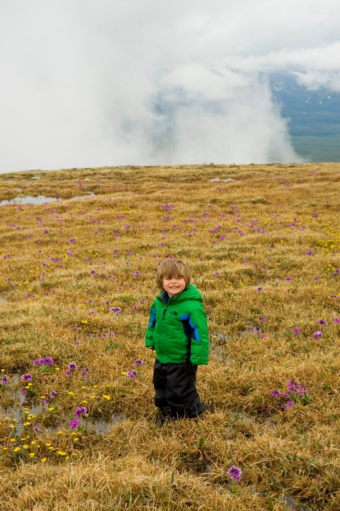 Stock Photo: 4340-3008 USA, Alaska, Denali National Park, Mount Margaret, Primrose Ridge, Toddler boy enjoying hike amid Chukchi primrose flowers (Primula Tschuktschorum) and blooming on Mount Margaret, spring