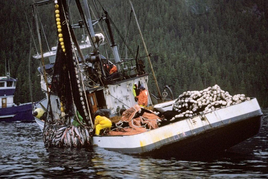 Stock Photo: 4340-640 Commercial Fishing Vessel Pulling in Sein Gear Filled with Chum Salmon