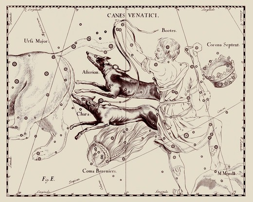 Stock Photo: 4351-528 A representation of the constellation of Canes Venatici, the Hunting Dogs, from the 'Firmamentum Sobiescianum sive Uranographia' of Johannes Hevelius of Danzig (modern Gdansk), 1687.