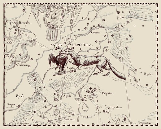 A representation of the constellations of Vulpecula et Anser, the Little Fox and the Goose, from the 'Firmamentum Sobiescianum sive Uranographia' of Johannes Hevelius of Danzig (modern Gdansk), 1687. : Stock Photo