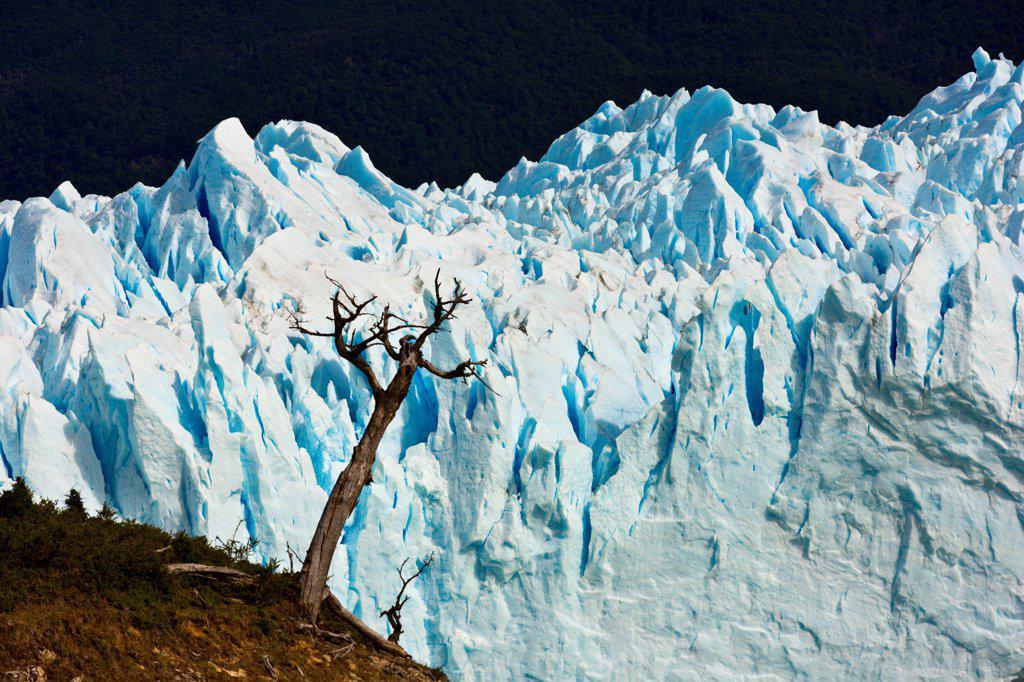 Stock Photo: 4355-2244 The Perito Moreno Glacier in Patagonia.