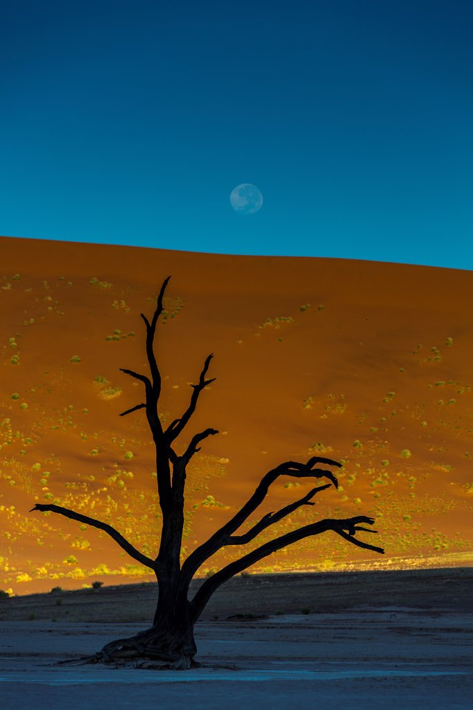 Stock Photo: 4355-2420 Namibia, Namib-Naukluft National Park, Soussusvlei, Dead tree at dusk