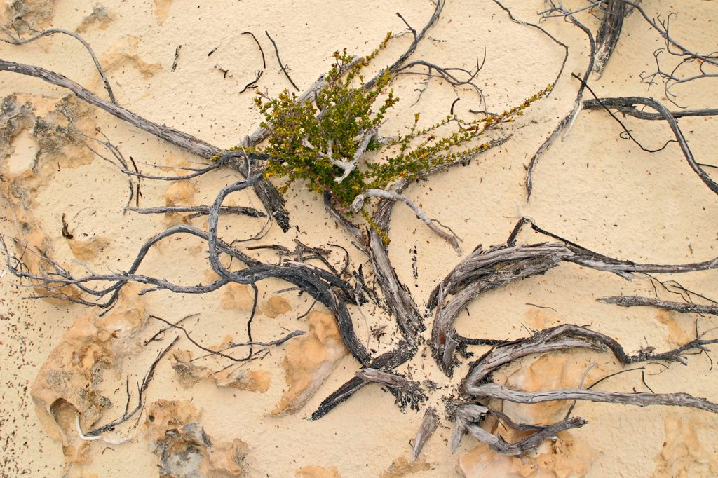 Stock Photo: 4362-718 Sand and Plants