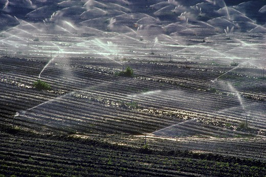 Stock Photo: 4369-364 Irrigation in the San Joaquin Valley