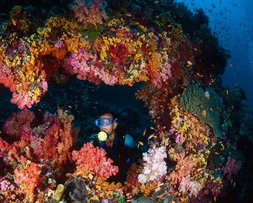 Diver in Coral Arch : Stock Photo