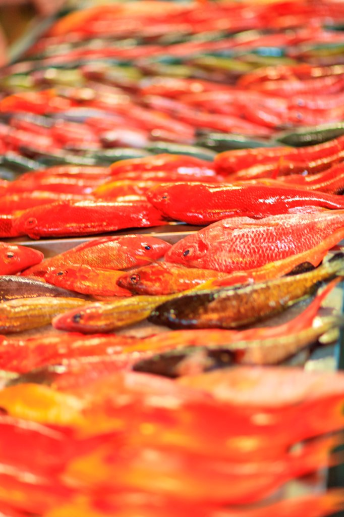 Red Snappers, Papeete Public Market, Tahiti Nui, Society Islands, French Polynesia, South Pacific : Stock Photo