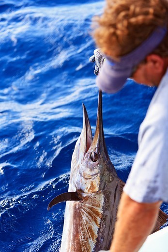 Stock Photo: 4372-730 Fishing guide hauls a sailfish aboard.