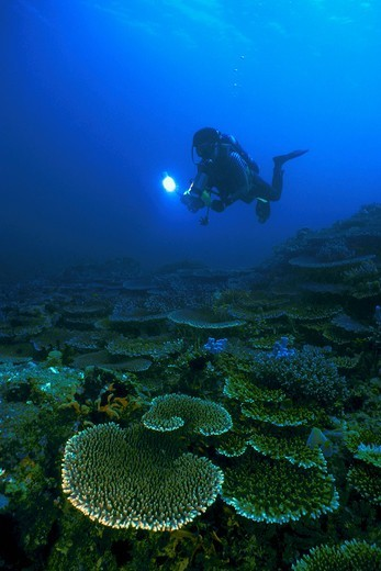Stock Photo: 4373-1091 Diver in Philippines