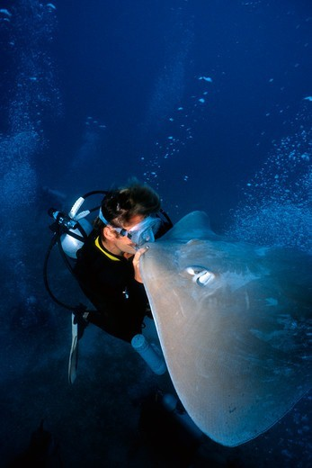 Stingray and Diver : Stock Photo