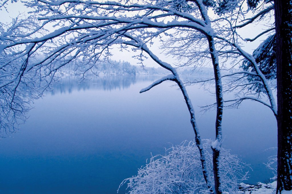 Winter Wonderland at Walden Pond : Stock Photo