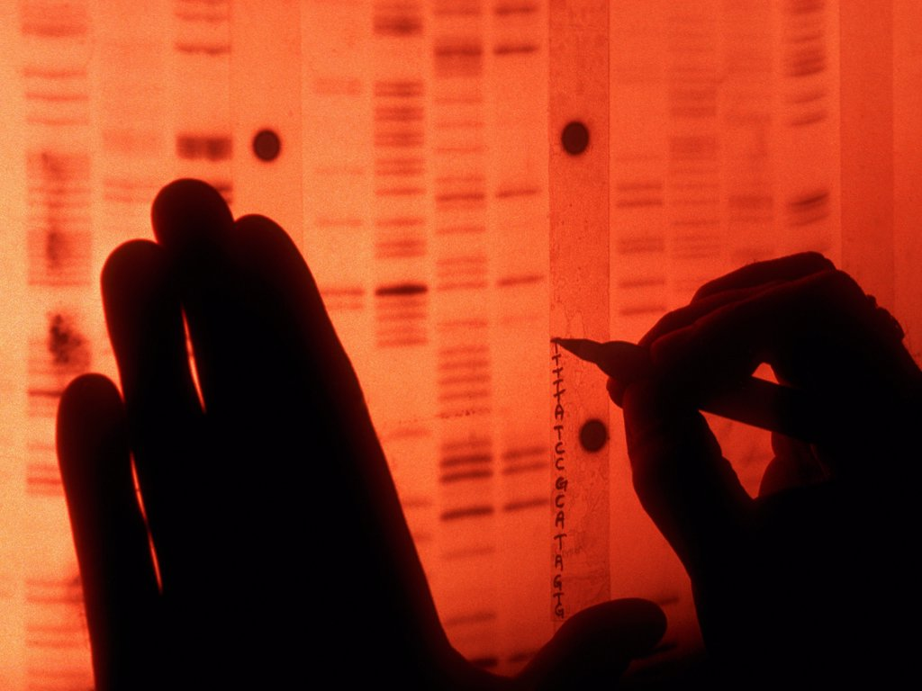 Stock Photo: 4377-293 Scientist Labels a Sequence of DNA Base Pairs from Radiograph