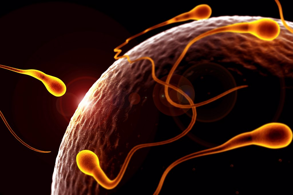 Stock Photo: 4378-1023 Stylized view of human sperm surrounding an ovum at the moment of conception.